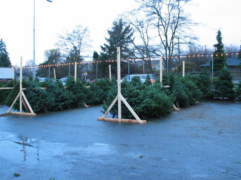 Christmas Tree Lots.White Center Now The Blog About White Center Holidays